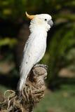 Série tropicale #2 d'oiseau Images stock