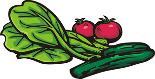 Série végétale d'illustration Image libre de droits