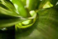 Série verte apaisante Image libre de droits
