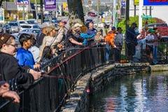 ` Sério anual Robertson Fishing Rodeo do porco do ` foto de stock