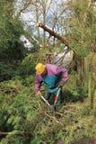 Sênior com os loppers, reduzindo ramos Imagens de Stock Royalty Free
