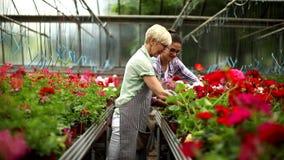 Sênior e jovens mulheres que trabalham junto no jardim no dia ensolarado video estoque