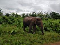 Sênior Lanka Foto de Stock Royalty Free