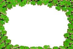Símbolo brilhante da planta do trevo do cartaz da decoração de patricks irlandeses de Saint do dia do feriado da boa sorte no gru ilustração royalty free
