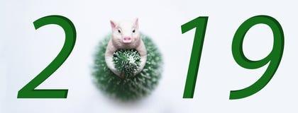 Símbolo de la cerda joven del Año Nuevo 2019 en vestido del árbol de navidad en la sonrisa blanca del fondo imagen de archivo