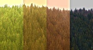 Símbolo de la igualdad en bosque profundo de la idea fotografía de archivo libre de regalías