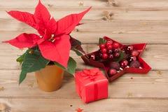 Símbolo de la Navidad Flor de la poinsetia Rectángulo de regalo Imagen de archivo