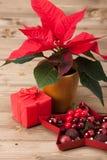 Símbolo de la Navidad Flor de la poinsetia Rectángulo de regalo Imagenes de archivo