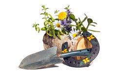 Símbolo de la primavera, de cultivar un huerto y de flores Fotografía de archivo