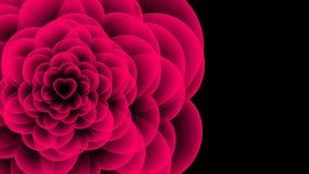 Símbolo de la radiografía de la flor del corazón, animación 4K del color del rosa del ejemplo del diseño de concepto del amor almacen de metraje de vídeo