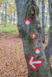 Símbolo de la trayectoria del alza pintado en corteza de árbol Imagen de archivo