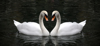 Símbolo del cisne del amor Imagen de archivo libre de regalías