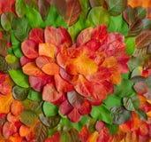 Símbolo del corazón del otoño fotografía de archivo libre de regalías