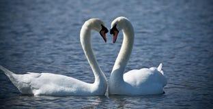 Símbolo do amor Fotografia de Stock Royalty Free