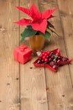 Símbolo do Natal Flor da poinsétia Caixa de presente Imagens de Stock