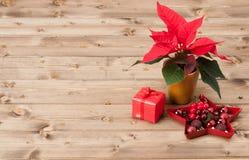 Símbolo do Natal Flor da poinsétia Caixa de presente Foto de Stock