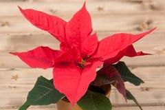 Símbolo do Natal Flor da poinsétia De madeira Fotografia de Stock Royalty Free