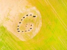 Símbolo esotérico del geomancy en campo de trigo verde Imagen de archivo libre de regalías