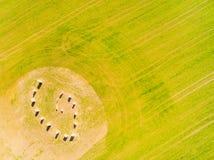 Símbolo esotérico del geomancy en campo de trigo verde Fotos de archivo