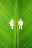 Símbolo masculino y femenino en una hoja del plátano imagenes de archivo