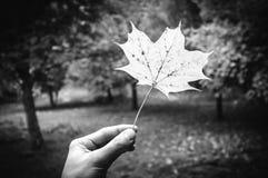 Símbolo natural del otoño Fotos de archivo