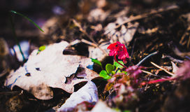 Símbolo pequeno da planta para a natureza e o crescimento Fotografia de Stock
