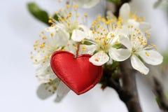Símbolo vermelho do coração Imagens de Stock Royalty Free