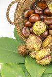 Símbolos abstratos do outono que colocam nas folhas da castanha e na cesta de vime Imagens de Stock Royalty Free