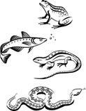 Símbolos blancos y negros de animales Imagen de archivo