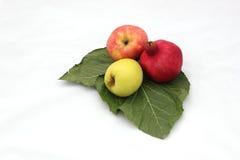 Símbolos das romã e das maçãs do ano novo & do x28 judaicos; Rosh tem Foto de Stock Royalty Free