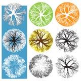 Símbolos de la copa de árbol stock de ilustración