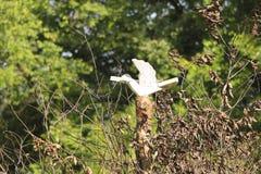 Símbolos eslavos del pájaro de madera foto de archivo libre de regalías