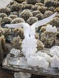 Sól Crystalized Koźlia czaszka Obraz Royalty Free