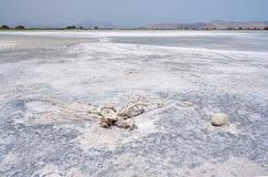 Sól na dnie Salt Lake Alykes Obrazy Royalty Free