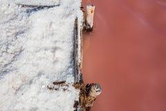 Sól na ziemi od menchii nawadnia jezioro Zdjęcia Royalty Free