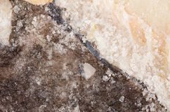 Sól utrzymany dorsz obrazy royalty free