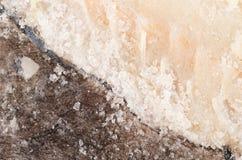 Sól utrzymany dorsz zdjęcia royalty free