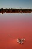 sól zakrywająca jeziorna trująca menchii rośliny sól Zdjęcia Stock