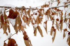 Sólido congelado nieve en mi cubierta fotografía de archivo