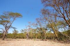 söder stillsam africa liggande Arkivbilder