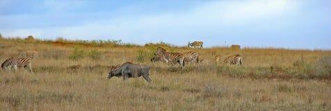 södra africa Arkivbild