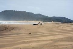 södra africa Arkivfoton