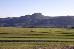 södra africa lantbruk Royaltyfria Foton
