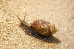 södra africa snail royaltyfria foton