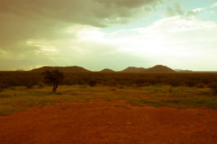 Södra - afrikan Bush Arkivbild