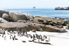 Södra - afrikansk pingvinkoloni Arkivbilder