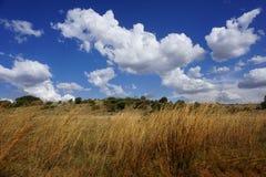 Södra - afrikansk savann med blå himmel i sommarsäsong arkivfoto