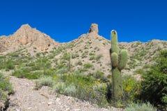 Södra - amerikansk enorm kaktus royaltyfri foto