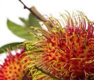 Södra - amerikansk exotisk frukt arkivfoto