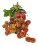 Södra - amerikansk exotisk frukt royaltyfri bild